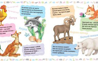 Загадки про зверей для детей 6-7 лет с ответами