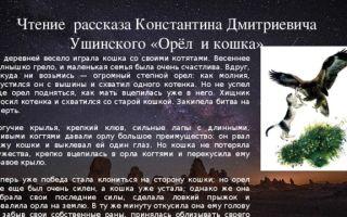 Ушинский «орёл и кошка» читать