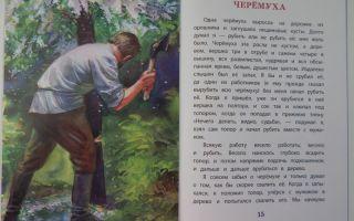 Толстой «черёмуха» читать