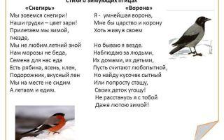 Стихи про птиц для детей 6-7 лет