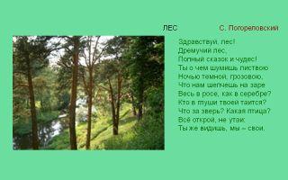 Погореловский «здравствуй, лес!» читать