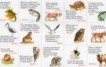 Загадки о животных для 3 класса с ответами