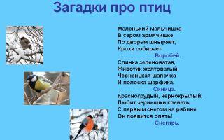 Загадки про птиц с ответами для 1-2 класса