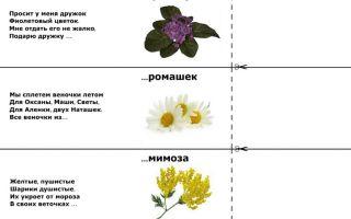 Загадки про цветы для детей 5-6-7 лет с ответами