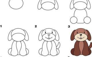 Как нарисовать собаку карандашом поэтапно для детей 5-8 лет