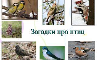 Загадки про птиц для детей 5-6-7 лет с ответами