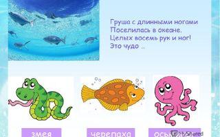 Загадки про морских обитателей для детей с ответами