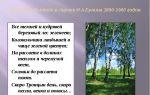 Бунин «берёзовый лес» читать