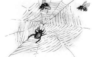 Ушинский «паук» читать текст
